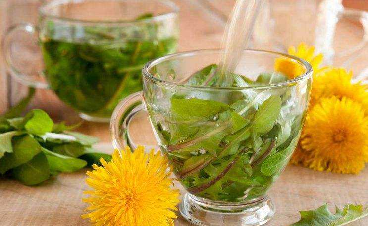 蒲公英可以直接晒干泡茶吗?自制蒲公英茶的方法