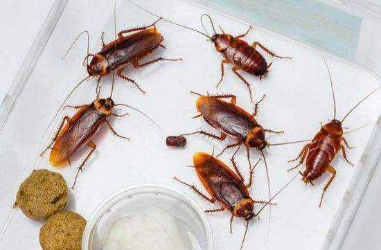 家里蟑螂多怎么办?用84消毒液拖地彻底解决蟑螂问题